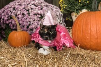 Pumpkin Orndorff
